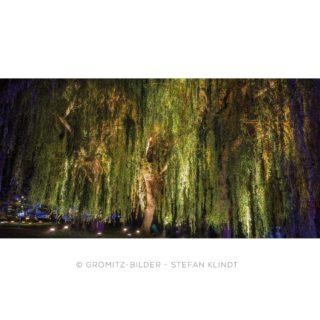 107 Grömitz Bilder - Kurpark - Baum - Lichtermeer im Kurpark