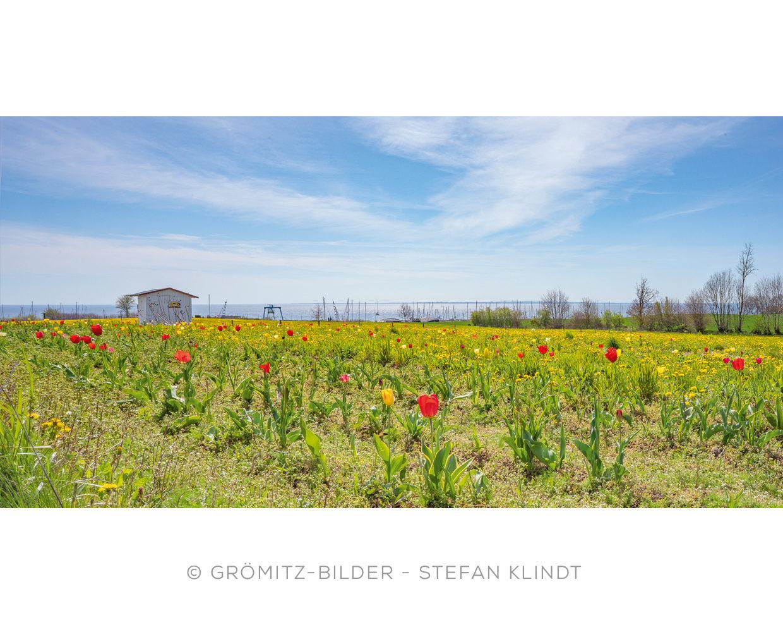 0421 Grömitz Bilder - Blumenpflückwiese am Yachthafen